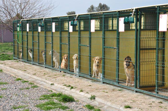 köpek çiftliği kurmak
