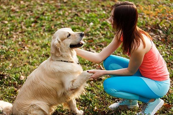 köpek eğitmenliği